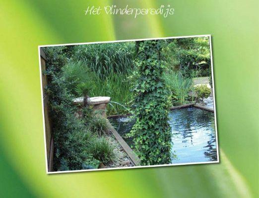 Prive Sauna Vlinderparadijs | Vlinderparadijs | Rustig gelegen sauna omgeven door prachtige natuur | Aarschot, Vlaams Brabant, België